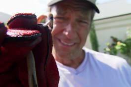Dirty Jobs - Deadly Snake Wrangler