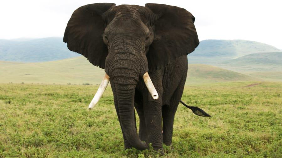 Blood Ivory - One Weapon One Elephant