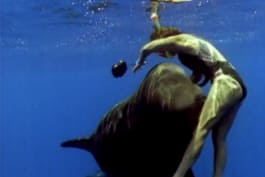 Untamed and Uncut - Pilot Whale Attack