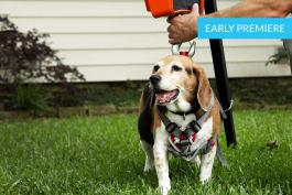 My Big Fat Pet Makeover - Beagle Burglar