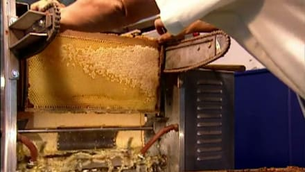 How It's Made - Honey, Honeycombs, Fiber Optics, Bricks, Pipe Organs