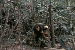 Raw War: The Lost Film of Dak To - The Lost Film of Dak To