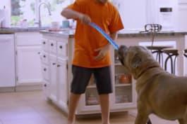 Cat vs. Dog - I'm Afraid Of My Dog!