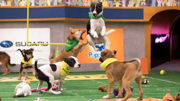 About The Show - Puppy Bowl | Animal Planet