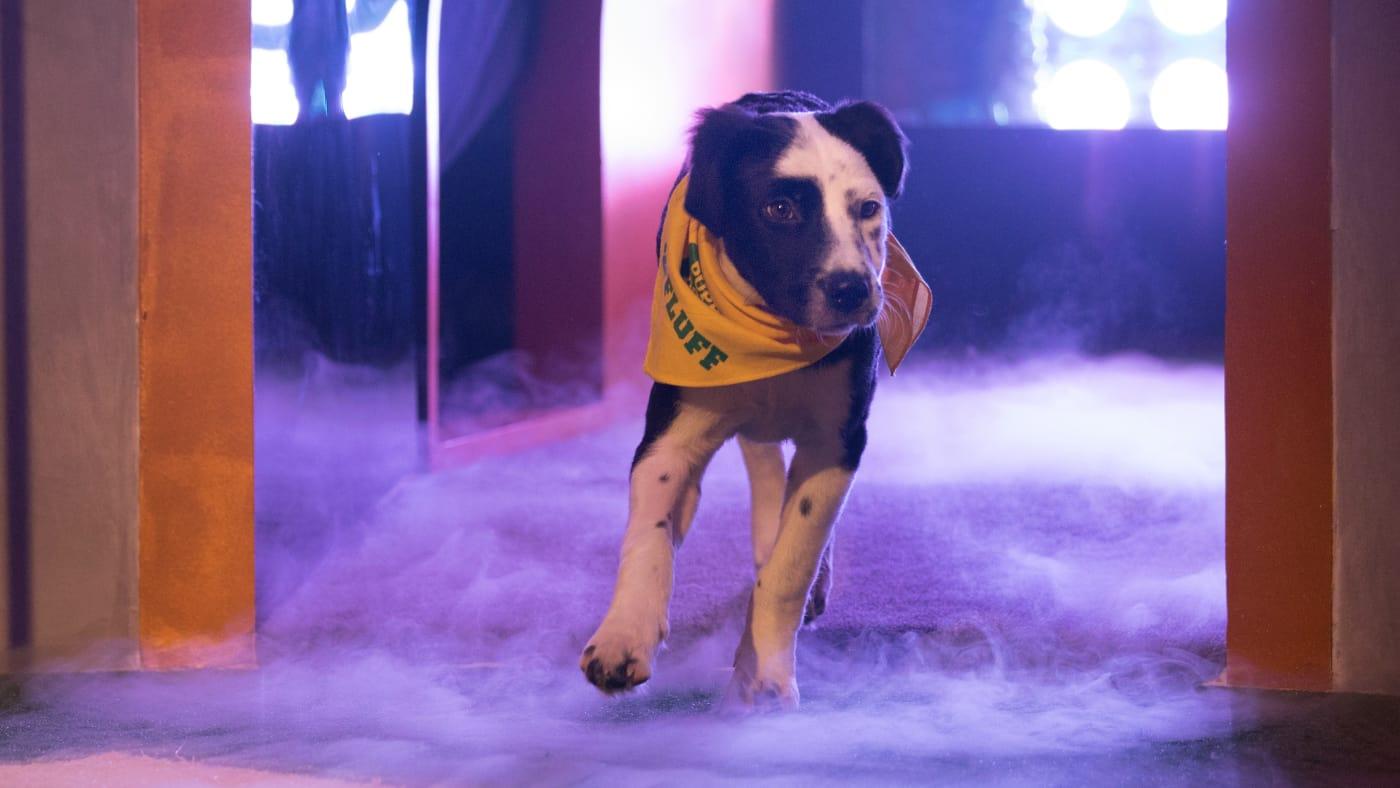 Puppy Bowl XIV BISSELL MVP