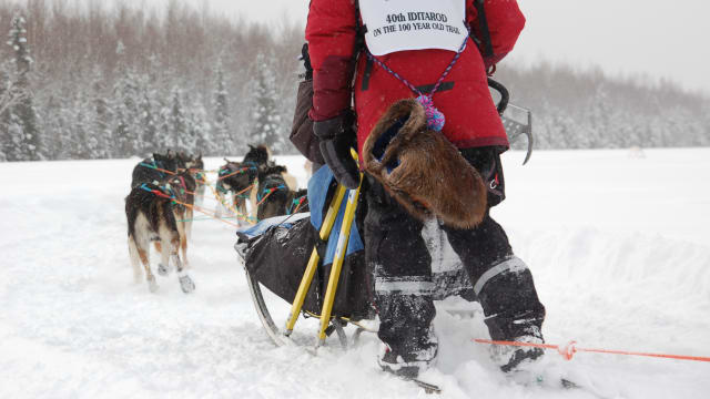 Toughest Race on Earth: Iditarod on FREECABLE TV