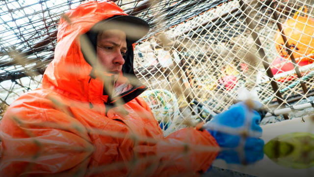Deadliest Catch: Greenhorn on FREECABLE TV
