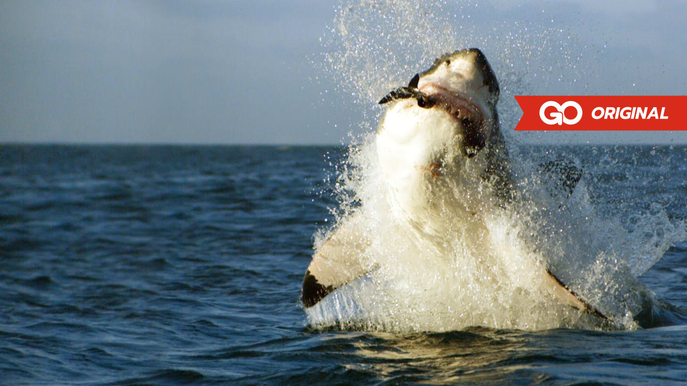 Shark Week's Most Intense Encounters