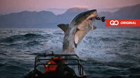 shark week watch full episodes more discovery