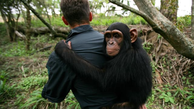 Escape to Chimp Eden on FREECABLE TV