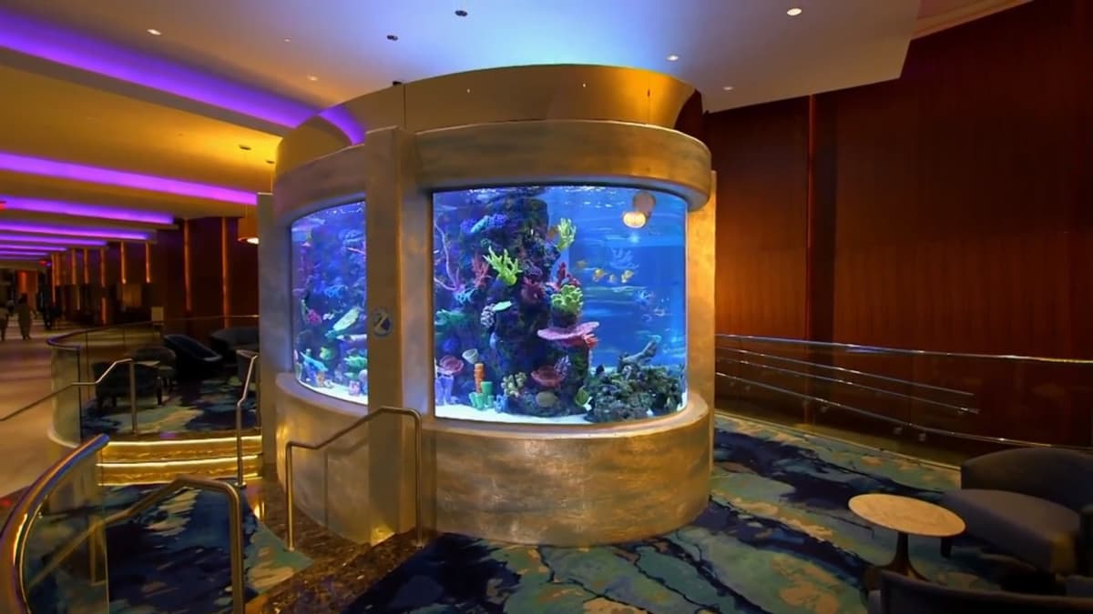 Tanked | in Ocean The All
