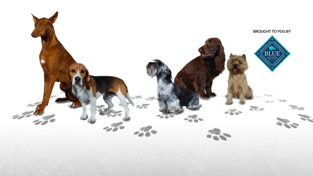 Dogs 101 on FREECABLE TV