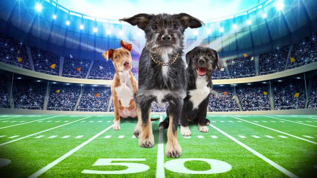 Puppy Bowl on Free TV App