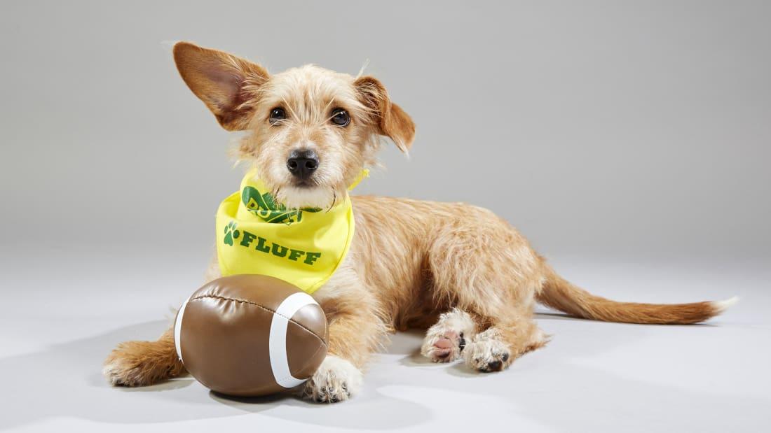Bien-aimée Puppy Bowl | Watch Full Episodes & More! - Animal Planet &HR_04