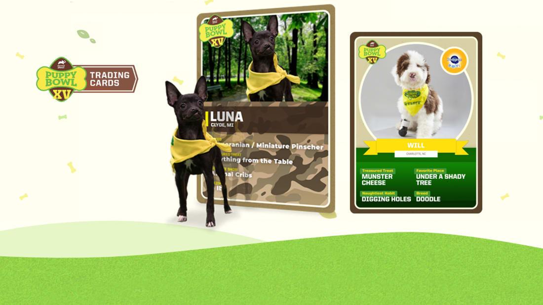 Très bien Puppy Bowl | Watch Full Episodes & More! - Animal Planet &YW_63