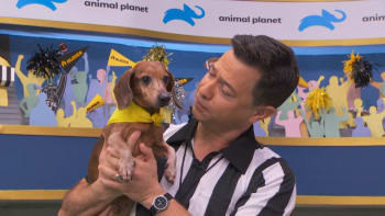 Puppy Bowl | Watch Full Episodes & More! - Animal Planet
