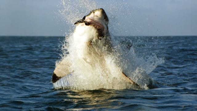 Shark Week's Most Intense Encounters on FREECABLE TV