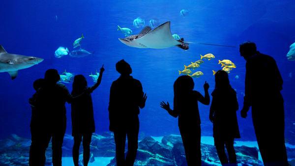 The Aquarium | Watch Full Episodes & More! - Animal Planet