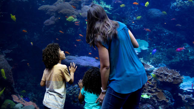 The Aquarium: A Deeper Dive on FREECABLE TV