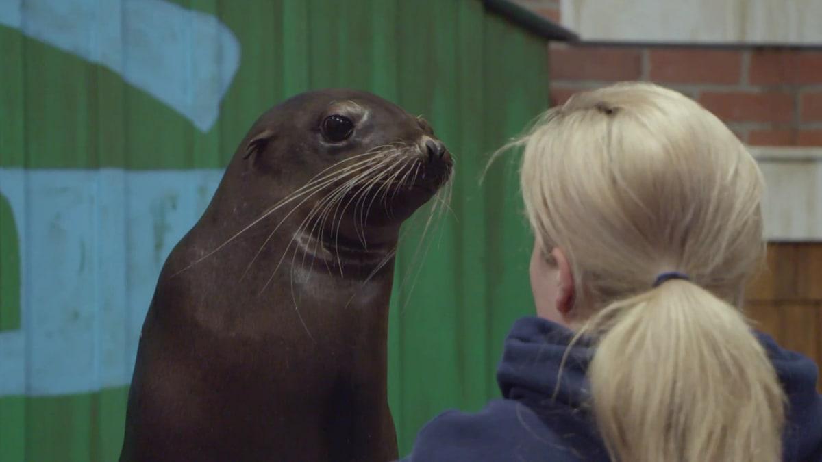 A Day of Seals and Sea Lions | The Aquarium: A Deeper Dive