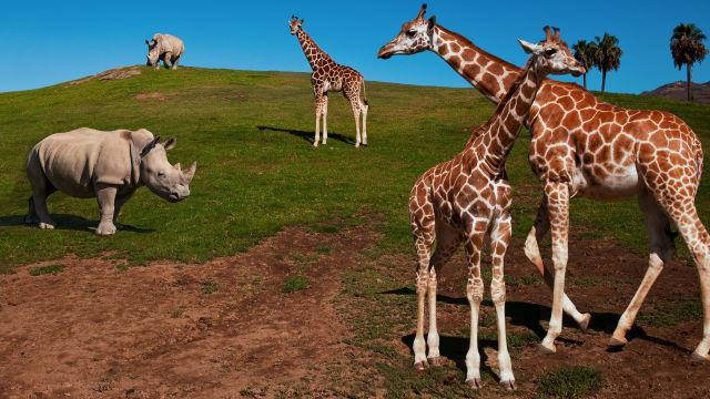 The Zoo: San Diego on Free TV App
