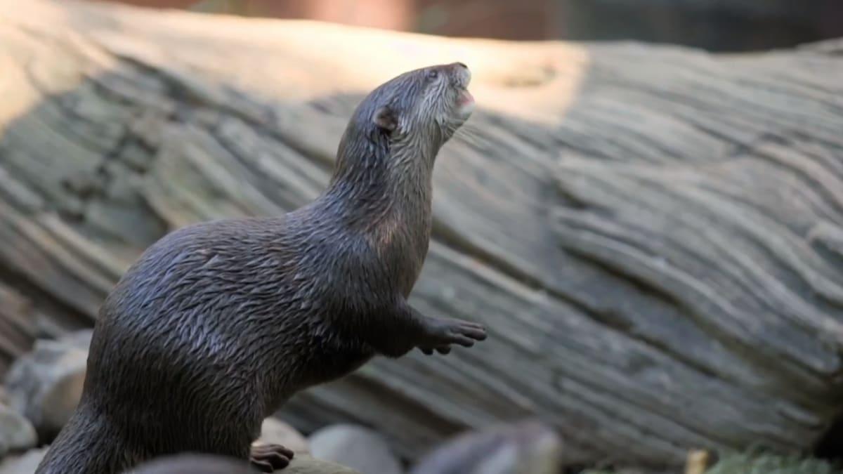 Bindi & The Otters | Crikey! It's the Irwins