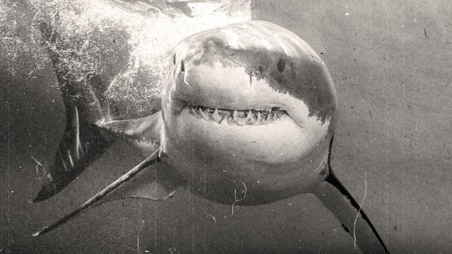 Shark Week on FREECABLE TV