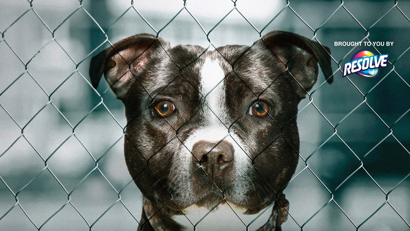 Pit Bulls Parolees Watch Full Episodes More Animal Planet