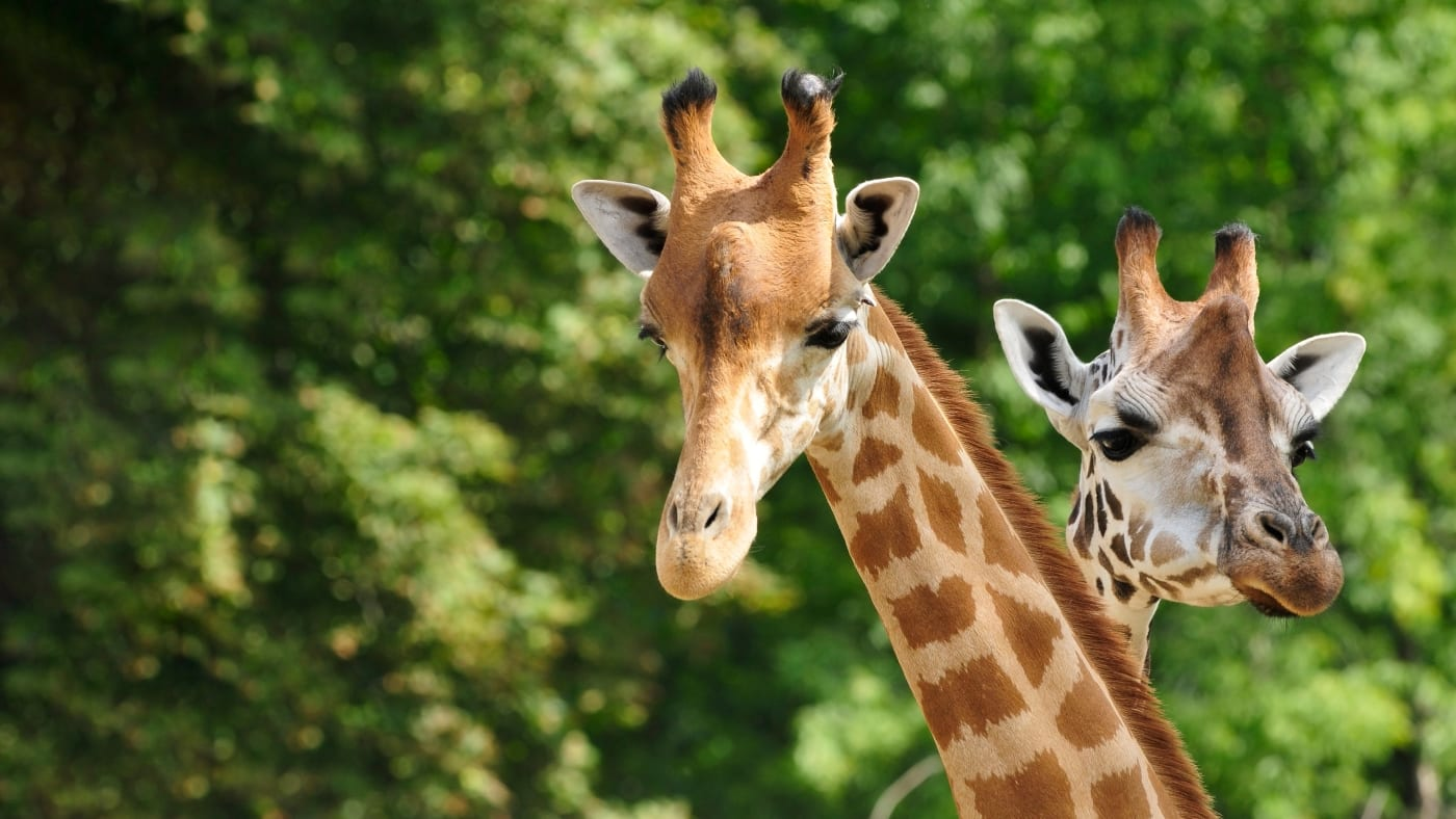 Celebrate National Zoo Lovers Day!
