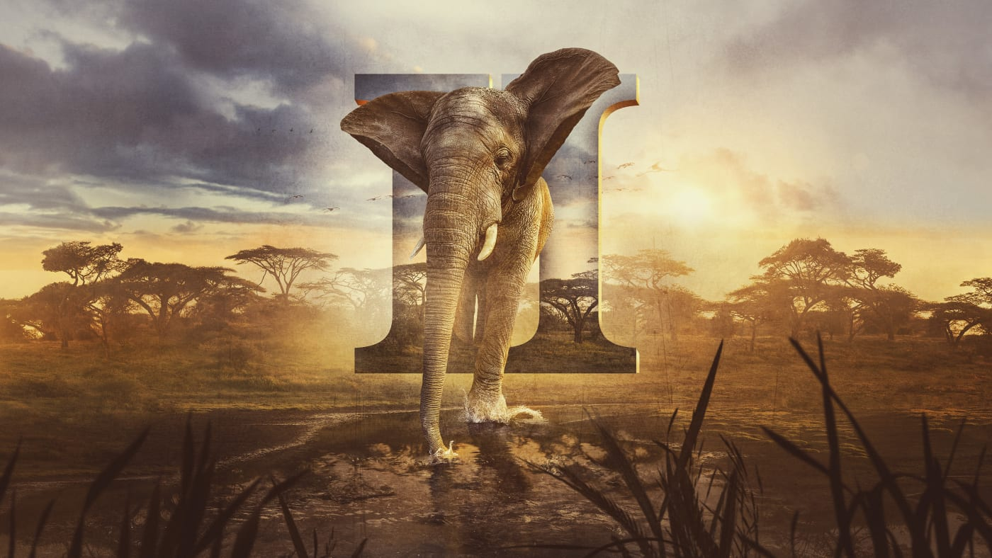 Serengeti II on Animal Planet